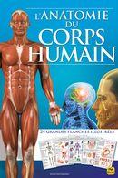 L'anatomie du corps humain N.E.