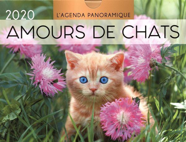 Agenda panoramique Amours de chats 2020
