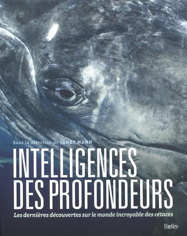 Intelligences des profondeurs : Les dernières découvertes sur le monde incroyable des cétacés