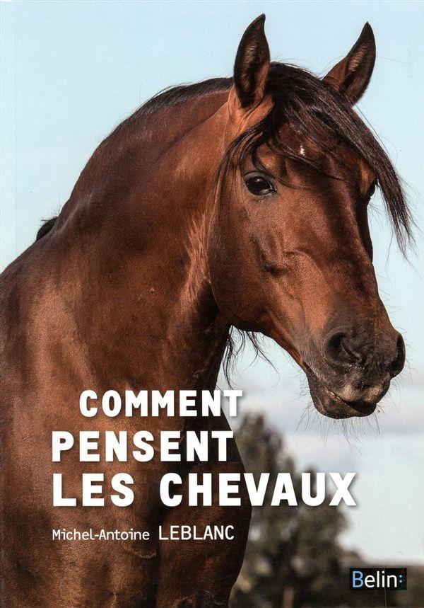 Comment pensent les chevaux