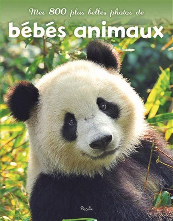 Mes 800 plus belles photos de bébés animaux