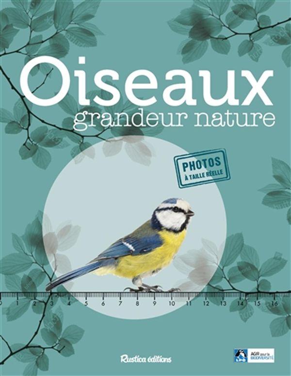 Oiseaux grandeur nature
