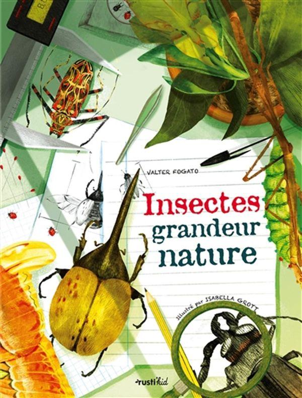 Insectes grandeur nature