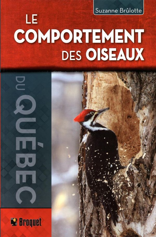 Comportement des oiseaux du Québec Le